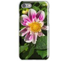 Pink Dahlia Close-up iPhone Case/Skin