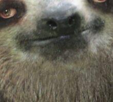 Sloth Beard Sticker