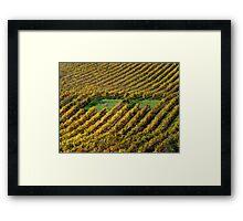 photoj  South Australia, Vineyard Framed Print