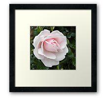 Delicately Pink Framed Print