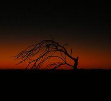 Dawn and Dead by ojoe