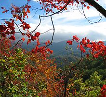 View From Laurel Falls Trail--Great Smoky Mountains by JKStanford