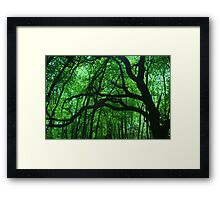 Tree limbs Framed Print
