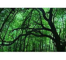 Tree limbs Photographic Print