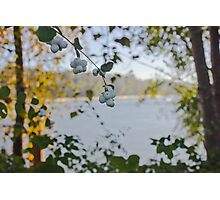 Fall on the Fraser Photographic Print