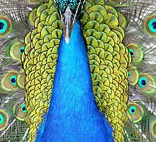 Exotic Beauty by Phyllis Wilson