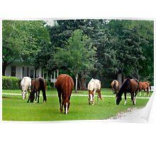 Plantation Horses Poster