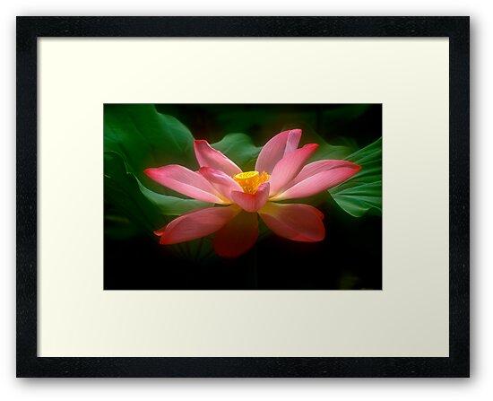 Lotus #18 by Janos Sison