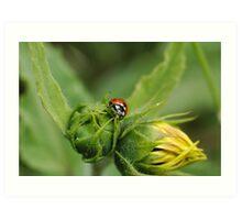 Ladybug on Yellow Flower Art Print