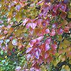 Autumn Colours no. 44 by bronspst
