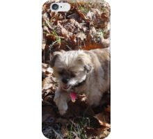 Brown Biddy in the brown leaves iPhone Case/Skin