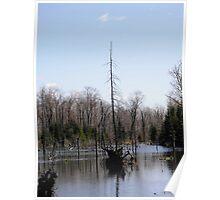 Beaver Pond, Gatineau Hills, Quebec, Canada Poster