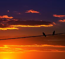 bird on a wire by StanB