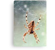 Garden spider eating prey Canvas Print