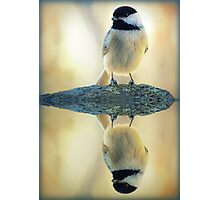 Reflecting Pool Chickadee Photographic Print