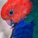 King Parrot by Mary Broome