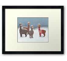 Winter Show Off Framed Print