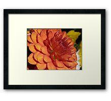 Russet Chrysanthemum Framed Print