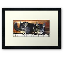 Chinchillas on the Piano Framed Print