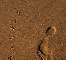 Walk with me... by Daniel Nahabedian