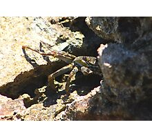 Cuban Crab Photographic Print