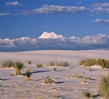 White Sands, New Mexico by Gail Falcon