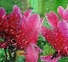 The colours of rain - spring pink by Vasile Stan