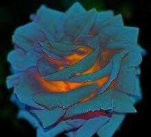 Mystical Bloom by Julie Marks