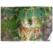 Humming birds nest  Poster