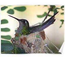 Hummingbird returns Poster