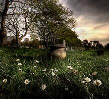 Flowers by George Stylianou