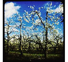 Springtime in the orchard Photographic Print