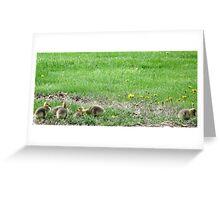 New Goslings Greeting Card