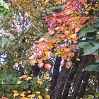 Autumn Princess by bronspst