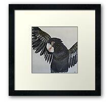'BLACK COCKATOO' Framed Print
