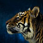 Sumatran tiger profile by Sheila  Smart