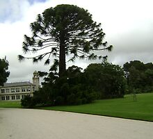 Magnificent tree on the pathway to Werribee Mansion by VENUSC1