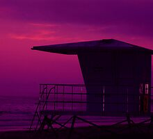 The Color Purple by Wilson Wyatt  Photography