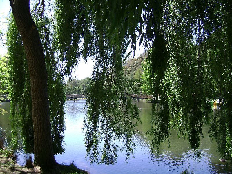 Weeping Willow Tree by VENUSC1