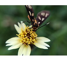 Macro Photography Insect on flower Photographic Print