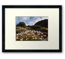 Mountain Everlastings Framed Print
