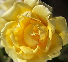 Happy Yellow Rose by Joy Watson
