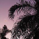 palms.... by xXDarkAngelXx