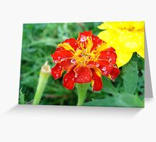 After a Rainfall Greeting Card