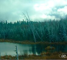 Evergreens of Northern Ontario by elisehendrick