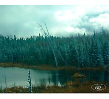 Evergreens of Northern Ontario Photographic Print