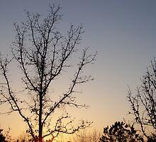 Afternoon Sunset by Kay  G Larsen