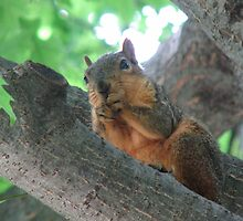 A Squirrel's Worry... by KBdigital