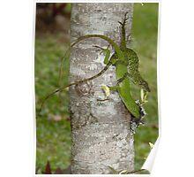 Lizards mating Poster
