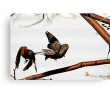 Mating Season Canvas Print